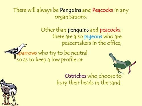 RedBird_Penguins5